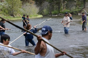 Chinook salmon release